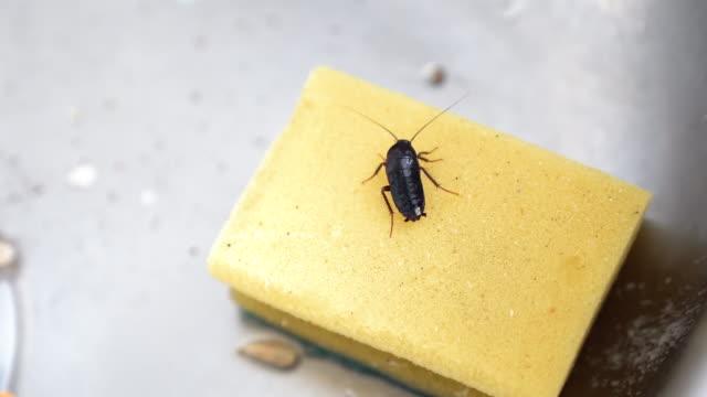 台所の流しのゴキブリ - ゴキブリ点の映像素材/bロール