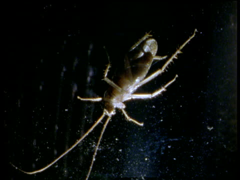 cockroach on glass of photocopier as light passes overhead - animal abdomen stock videos and b-roll footage