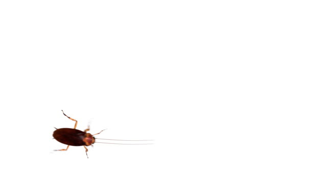 cockroach on white from top - insect stock videos & royalty-free footage