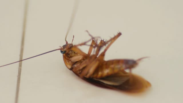 cockroach touch a insecticide before die - pests stock videos & royalty-free footage