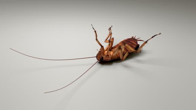 stockvideo's en b-roll-footage met kakkerlak ondersteboven en bewegen op wit - voelspriet