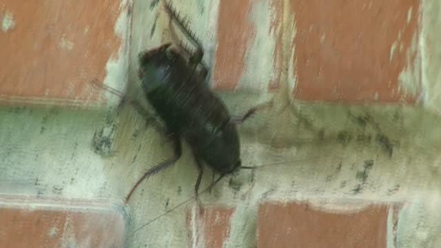 stockvideo's en b-roll-footage met cockroach - voelspriet