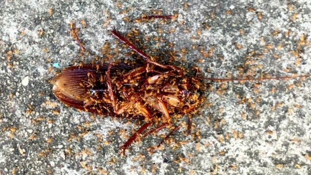 cockroach - insect stock videos & royalty-free footage