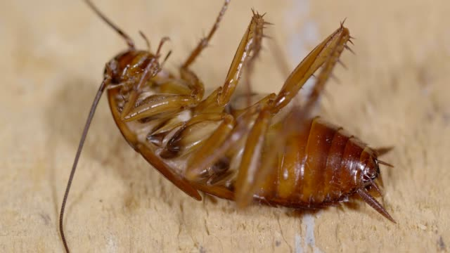 cockroach - cockroach stock videos & royalty-free footage