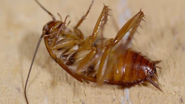 ゴキブリ - ゴキブリ点の映像素材/bロール