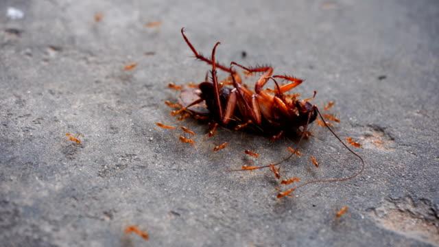vídeos y material grabado en eventos de stock de cucaracha - matar