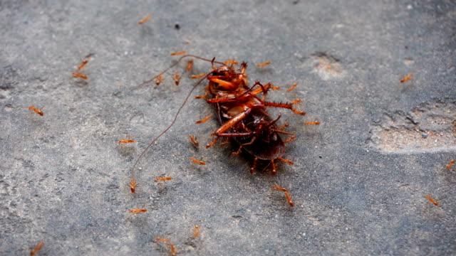 vídeos de stock e filmes b-roll de cockroach - matar