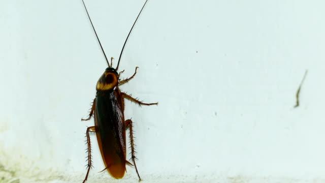 kackerlacka - skadedjur bildbanksvideor och videomaterial från bakom kulisserna
