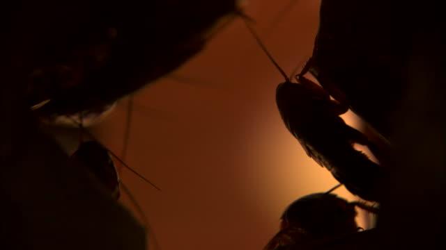 cockroaches hiding in dark - ゴキブリ点の映像素材/bロール