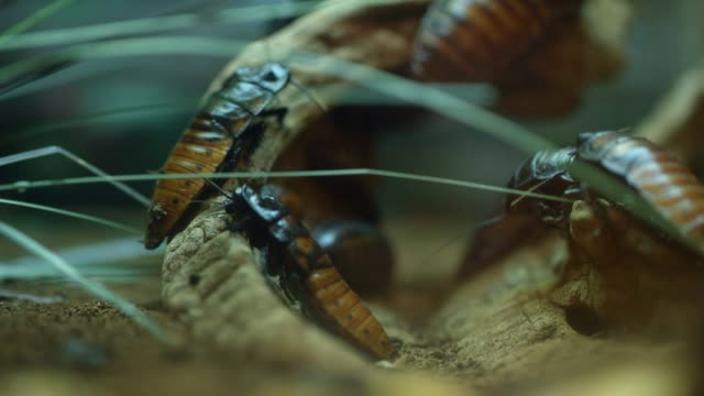 cockroaches sit on a stick - cockroach stock videos & royalty-free footage