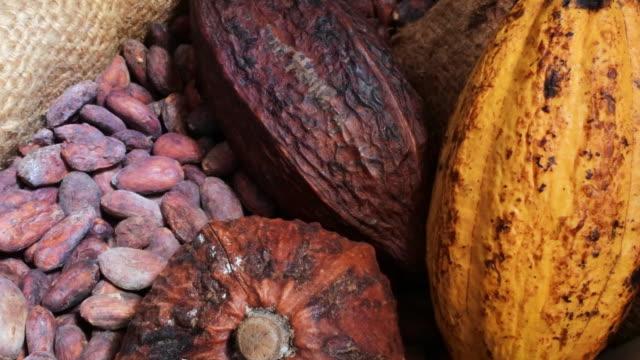 Cocoa beans. cacao en grano
