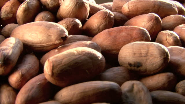cocoa beans. cacao en grano - hot chocolate stock videos and b-roll footage