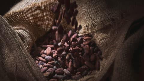 vídeos y material grabado en eventos de stock de frijoles de cacao - bean