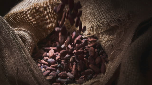 vídeos de stock e filmes b-roll de cocoa beans - seed