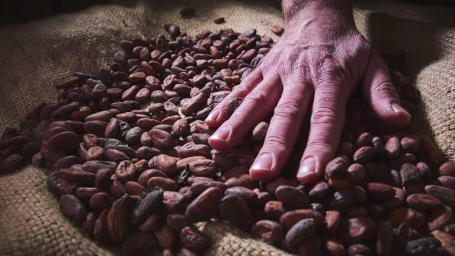 vídeos de stock e filmes b-roll de cocoa beans - feijão