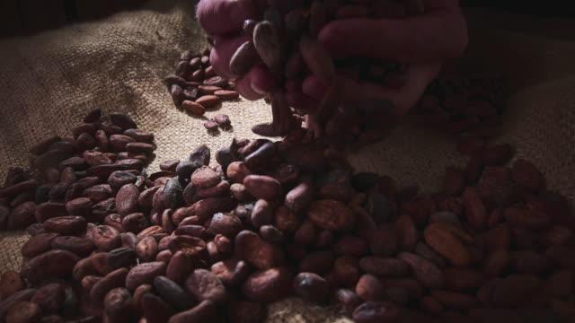 kakaobohnen - bean stock-videos und b-roll-filmmaterial