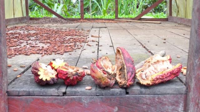 cocoa plantation - cocoa powder stock videos & royalty-free footage