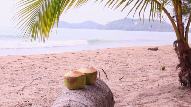coconut drink on the beach background - coconut palm tree stock videos & royalty-free footage