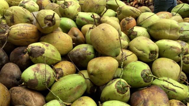 vídeos de stock, filmes e b-roll de coco indústria no sri lanka - coco