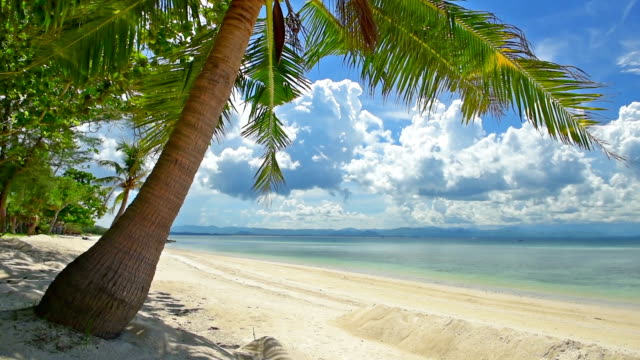 coconut leaf moving by wind with blue sky cloudy,beach scenic
