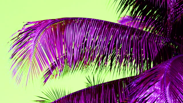coconut leaf trees blowing in the wind, copy space, odd color purple leaf green sky - composite image stock videos & royalty-free footage