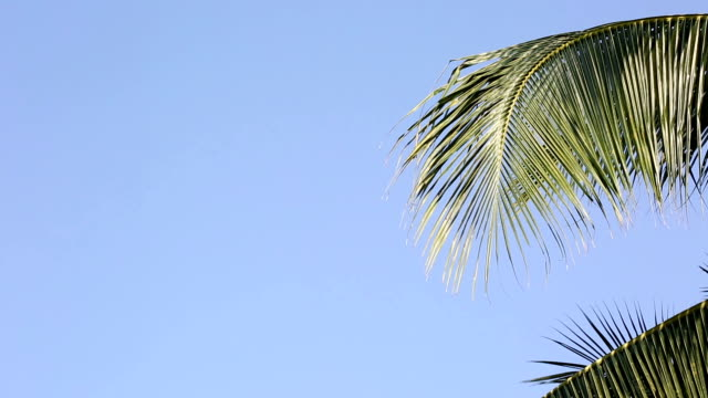 coconut leaf trees blowing in the wind over blue sky, copy space - composite image stock videos & royalty-free footage