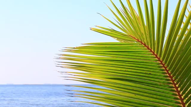 vídeos de stock, filmes e b-roll de folhas do coco que se movem ao longo do vento no verão na praia do mar - coco