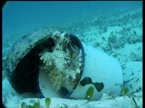 coconut octopus in metal cup creates roof using coconut half, mabul, borneo, malaysia - mabul island stock videos and b-roll footage