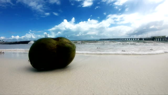 coconut on the beach - cancun stock videos & royalty-free footage