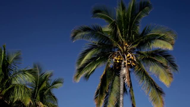 coconut palm against deep blue sky - polarizer stock videos & royalty-free footage