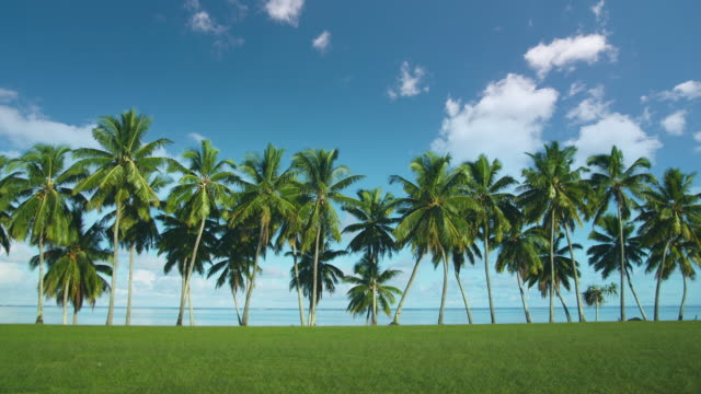 t/l, ws, coconut palm along tropical beach, aitutaki lagoon, aitutaki, cook islands - aitutaki lagoon stock videos & royalty-free footage