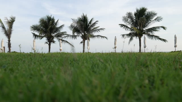 vídeos de stock, filmes e b-roll de coqueiro tropical praia - fan palm tree