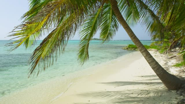 coconut palm and waves on sandy beach, belize - clima tropicale video stock e b–roll