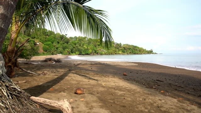 ds coconut palm on the beach in costa rica - costa rica stock videos and b-roll footage