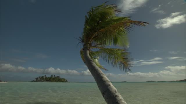 coconut palm (cocos nucifera) on tropical coast, rangiroa, french polynesia - island stock videos & royalty-free footage