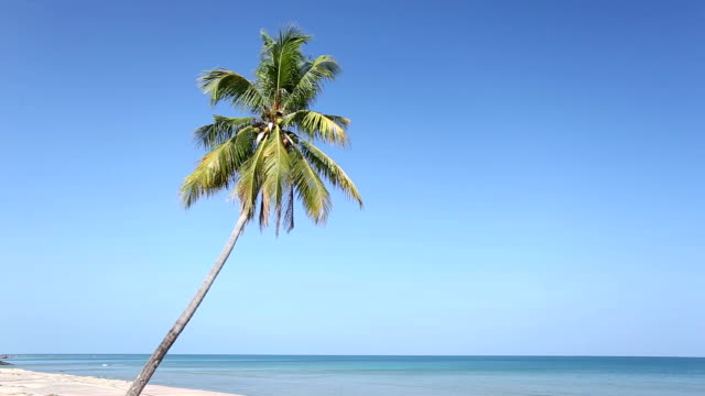 coconut palm tree at the beach - palm tree stock videos & royalty-free footage