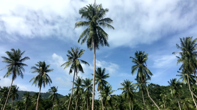coconut palm tree on sunshine and sandy beach - tropical tree stock videos & royalty-free footage