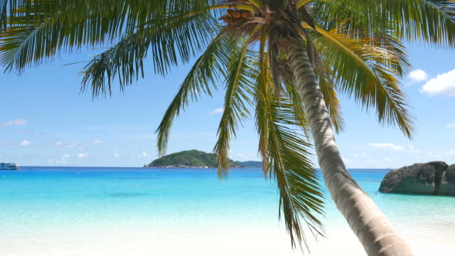 Coconut palm tree on the beach
