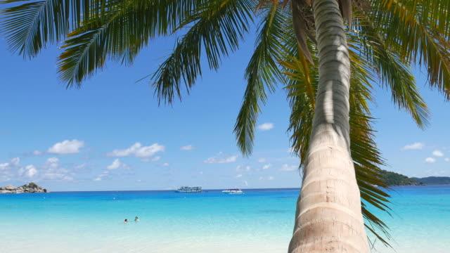 HD - Coconut palm tree on the beach