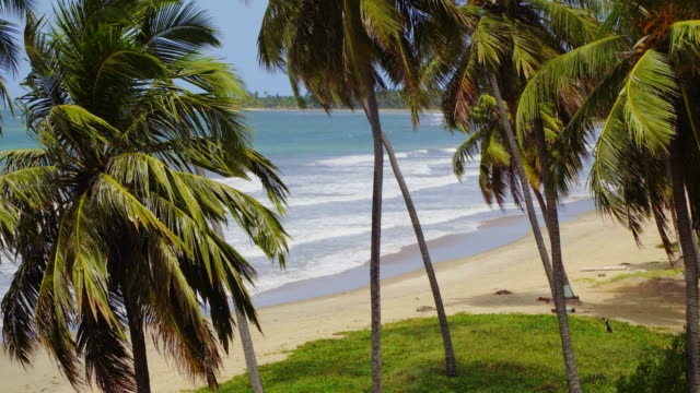 coconut palm tree on tropical beach - northeastern brazil stock videos and b-roll footage