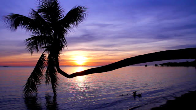 coconut palm tree with sunset background. - ko phangan stock videos and b-roll footage