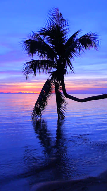 coconut palm tree with twilight background (vertical). - ko phangan stock videos and b-roll footage