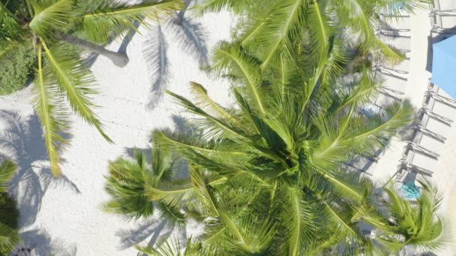 coconut palm trees from top view at miami beach, florida - solstol bildbanksvideor och videomaterial från bakom kulisserna