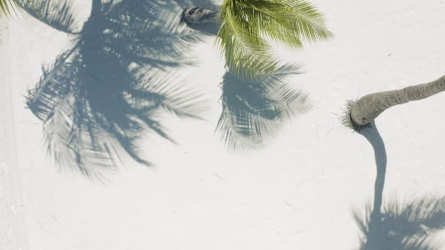 coconut palm trees from top view - palm leaf stock videos & royalty-free footage