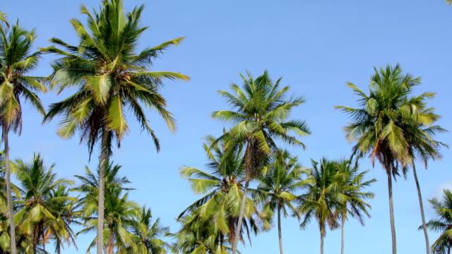vídeos de stock, filmes e b-roll de coqueiros no céu azul - coco