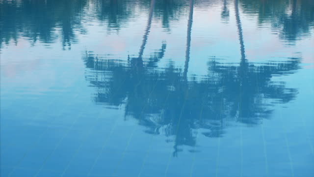 coconut palm trees reflections in water - palm tree stock videos & royalty-free footage