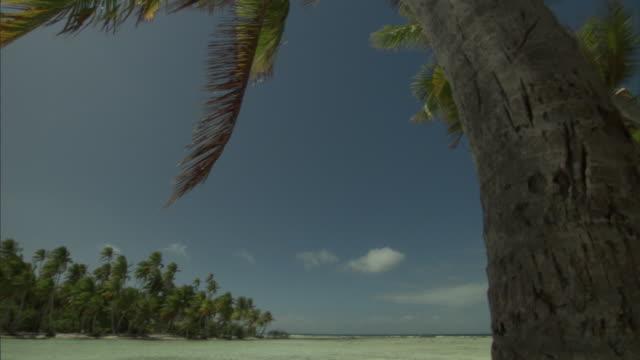 Coconut palms (Cocos nucifera) and shallow lagoon island, Rangiroa, French Polynesia