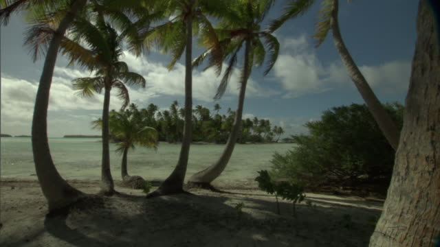 coconut palms (cocos nucifera) and shallow lagoon island, rangiroa, french polynesia - coconut palm tree stock videos & royalty-free footage