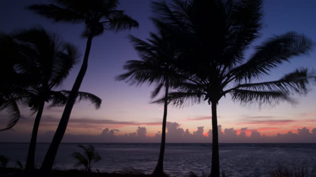 vidéos et rushes de tl coconut palms at sunrise - palmier
