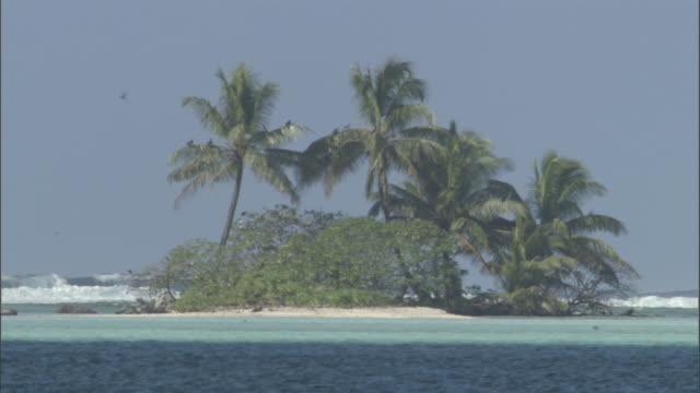 vídeos de stock, filmes e b-roll de coconut palms (cocos nucifera) on tropical islet, palmyra atoll, usa - atol